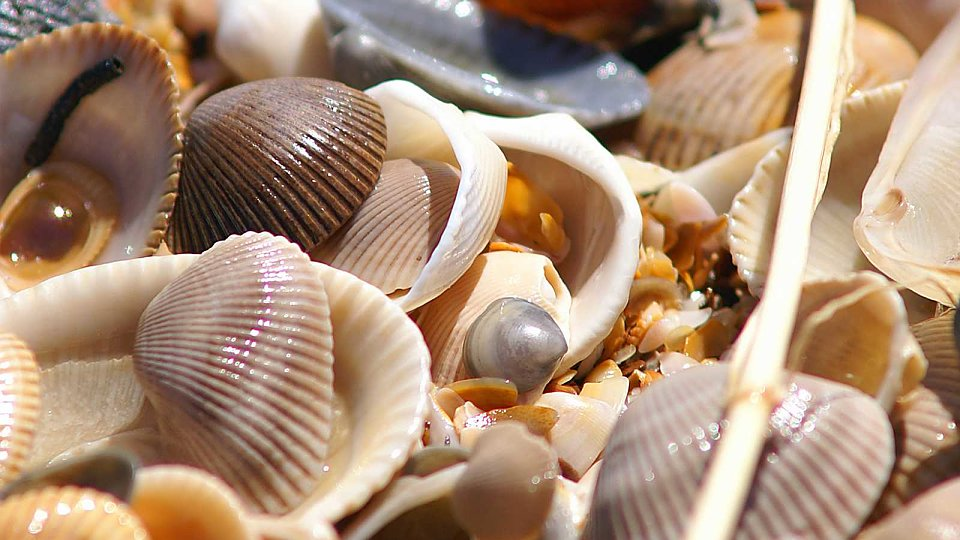 /images/r/stockvault-sea-shells104622/c960x540g0-1030-1600-1932/stockvault-sea-shells104622.jpg